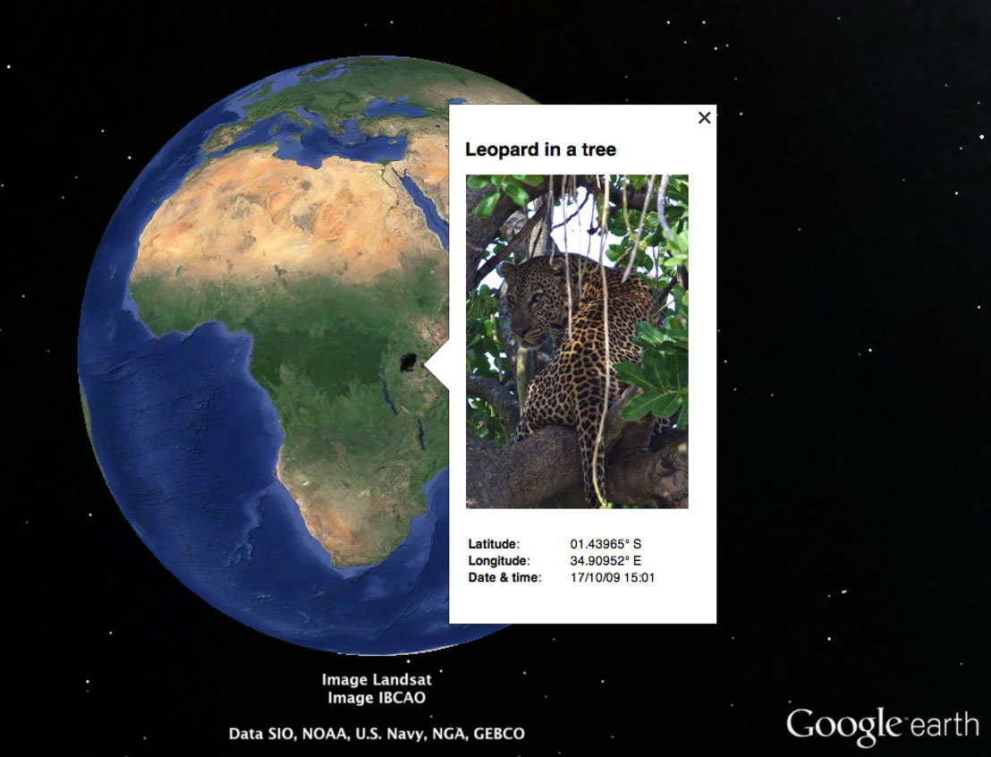 Google Earth: Leopard in a tree